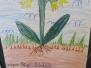 Jarní rostliny