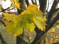 podzim_018