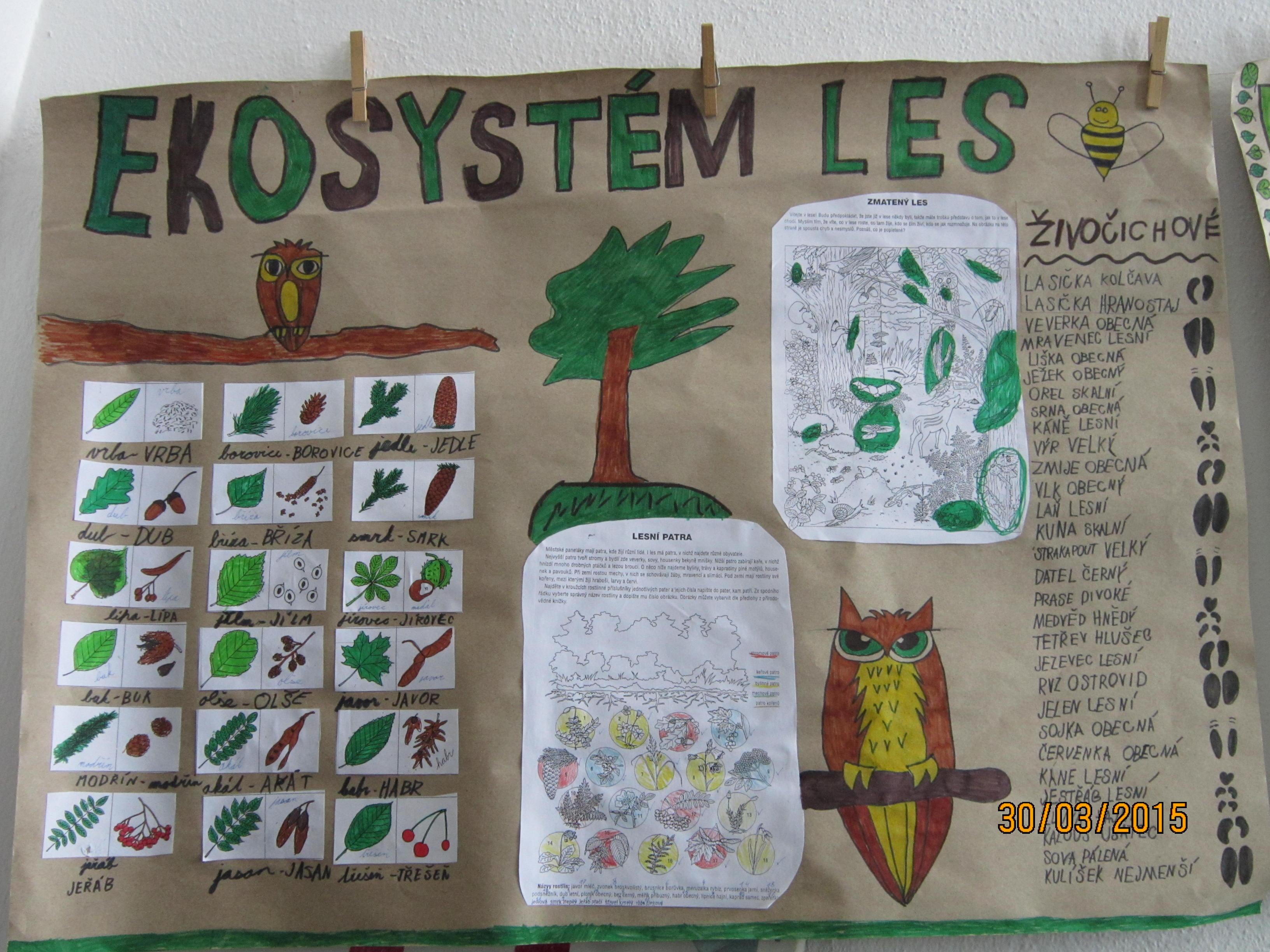 Hura Do Lesa Projekt Lesni Ekosystem Zakladni Skola Stare Mesto